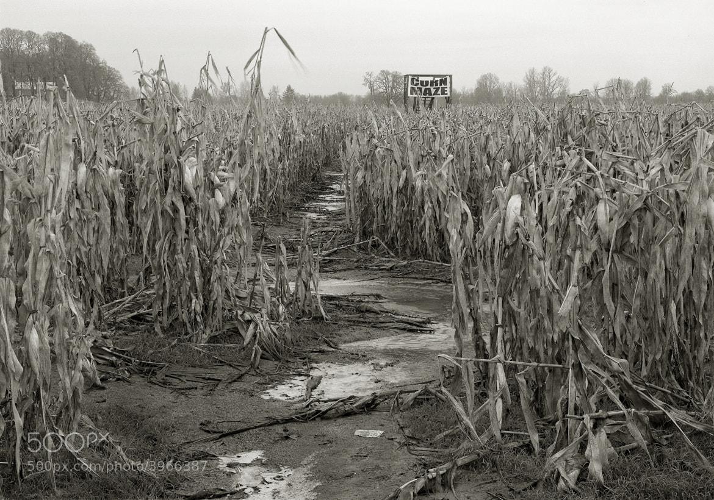 Photograph Corn Maze in Winter, Sauvie Island by Austin Granger on 500px