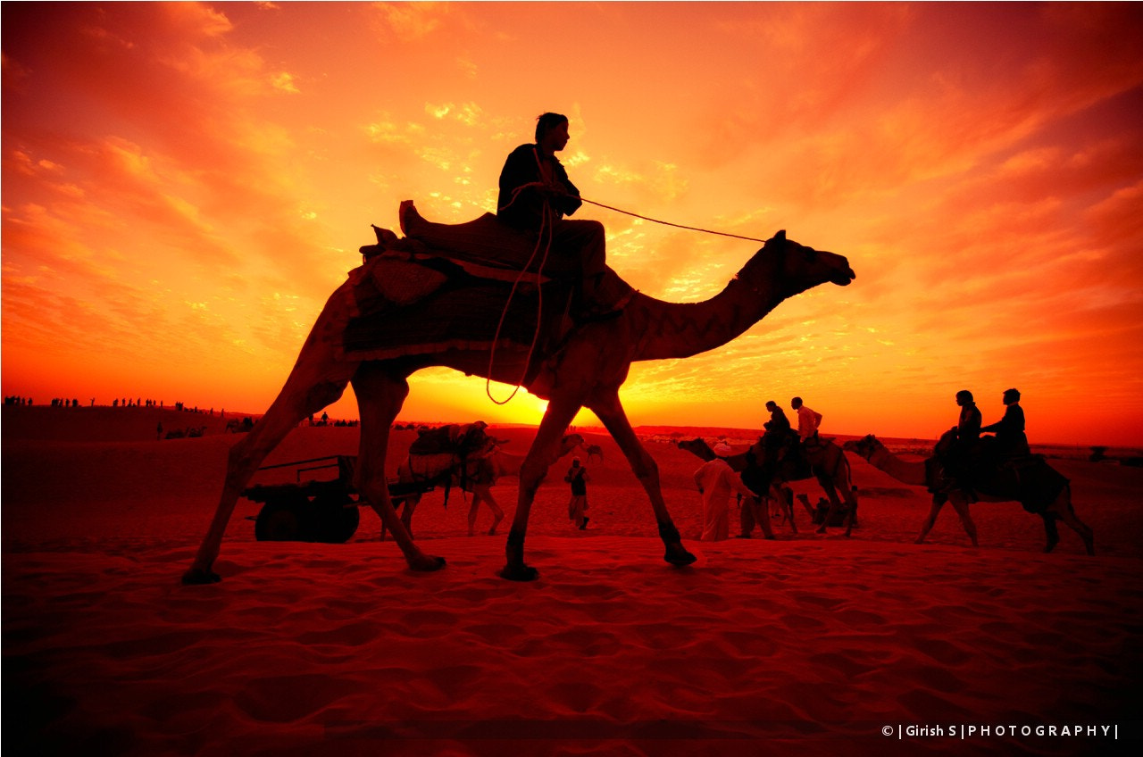 Photograph Royal Ride in the Golden Sand by Girish Suryawanshi on 500px