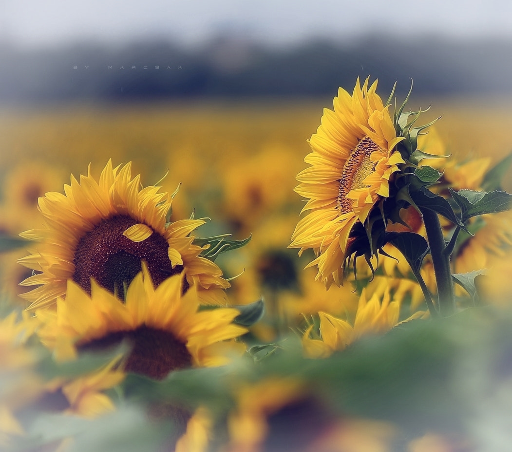 Photograph Yellow by Marcsaa on 500px