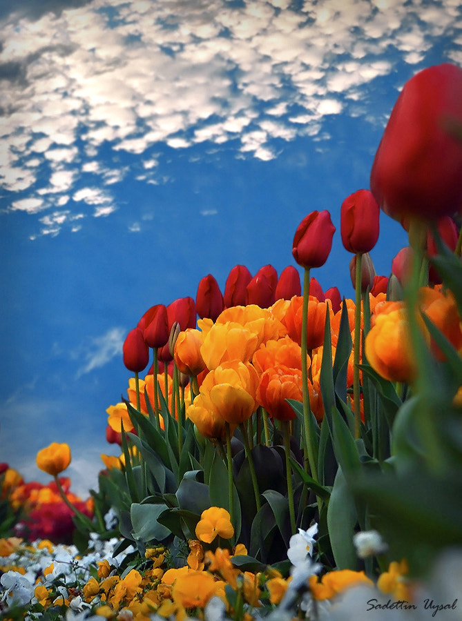 Photograph Color of nature by Sadettin  Uysal on 500px