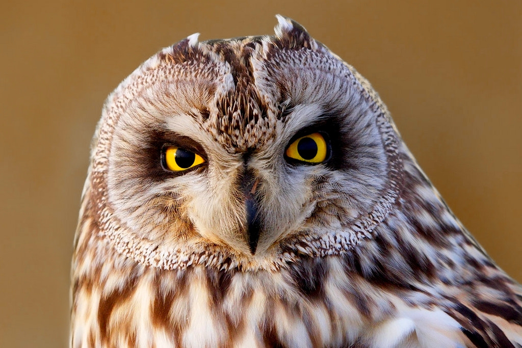 Photograph look me in my eyes by wise photographie on 500px