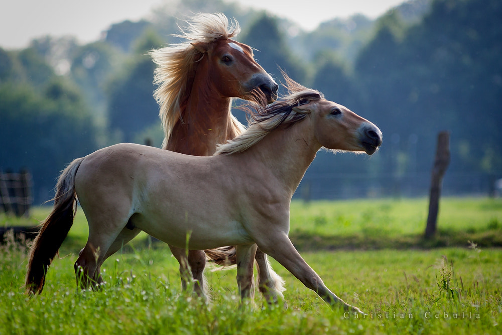 Photograph galop by Christian Cebulla on 500px
