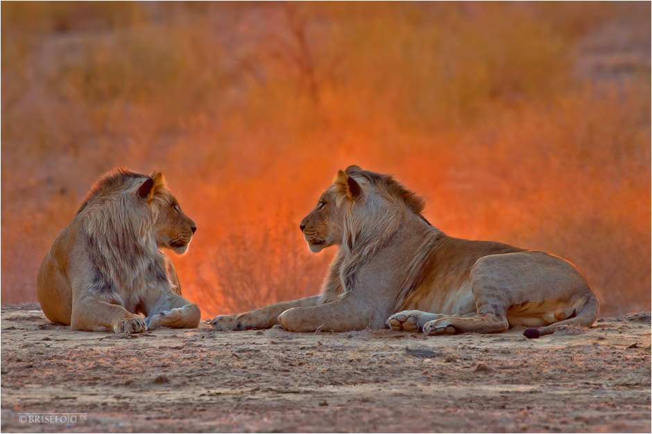 Photograph Sunrise in the Kalahari by Bri Se on 500px