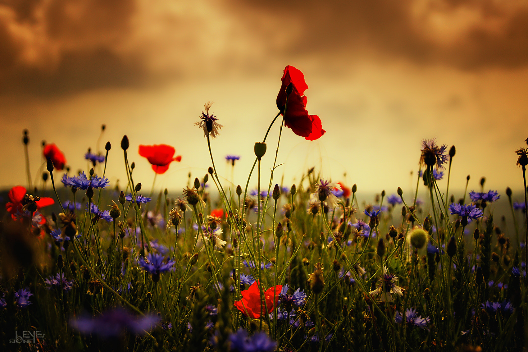 Photograph summertime by Sabine Beyer on 500px