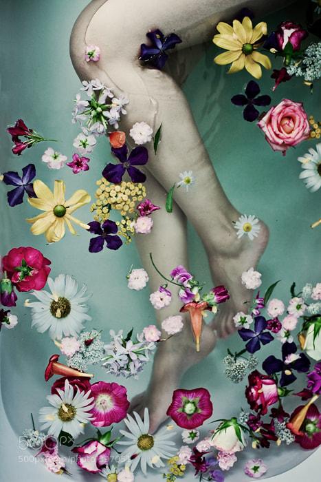 Photograph les fleurs by Andrea Hübner on 500px