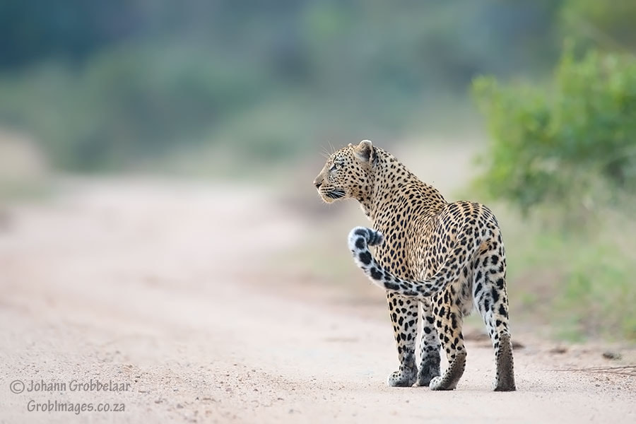 Photograph Looking for food.. by Johann Grobbelaar on 500px