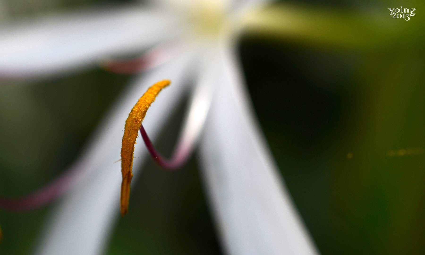 Photograph Stamen by yoing on 500px