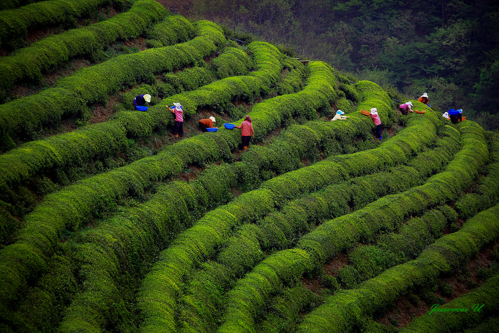 Photograph harvest by Jaewoon U on 500px