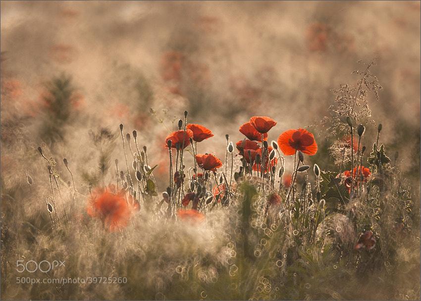 Photograph Untitled by Dorota Miklaszewska on 500px