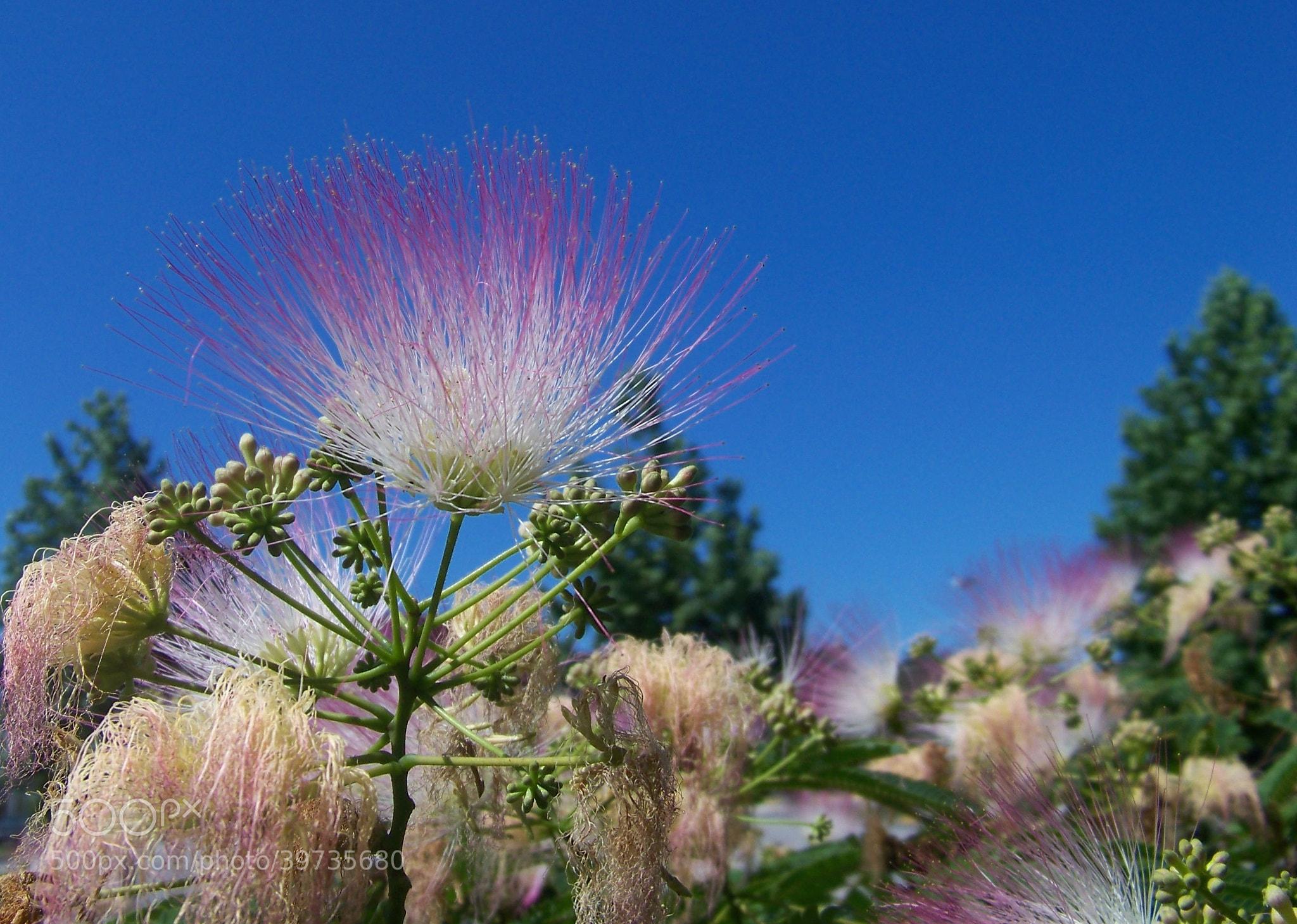 Photograph Flower in heat by Gita Goodwin on 500px