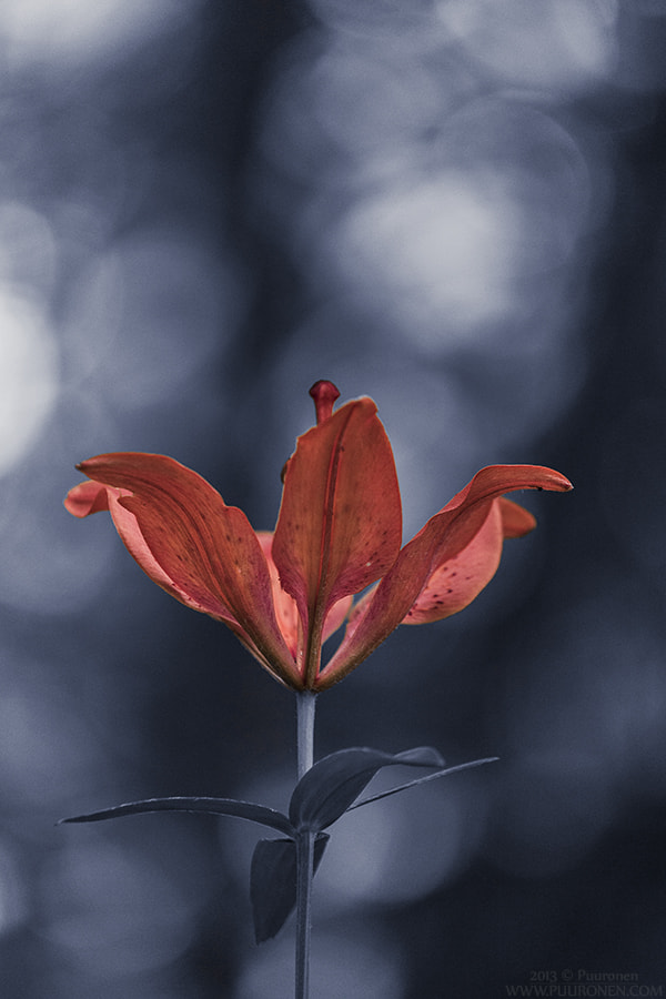 Photograph red by Samu Puuronen on 500px