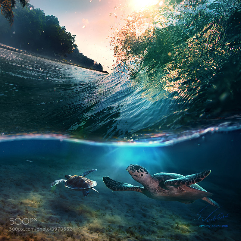 Photograph Tropical paradise with turtles by Vitaliy Sokol on 500px