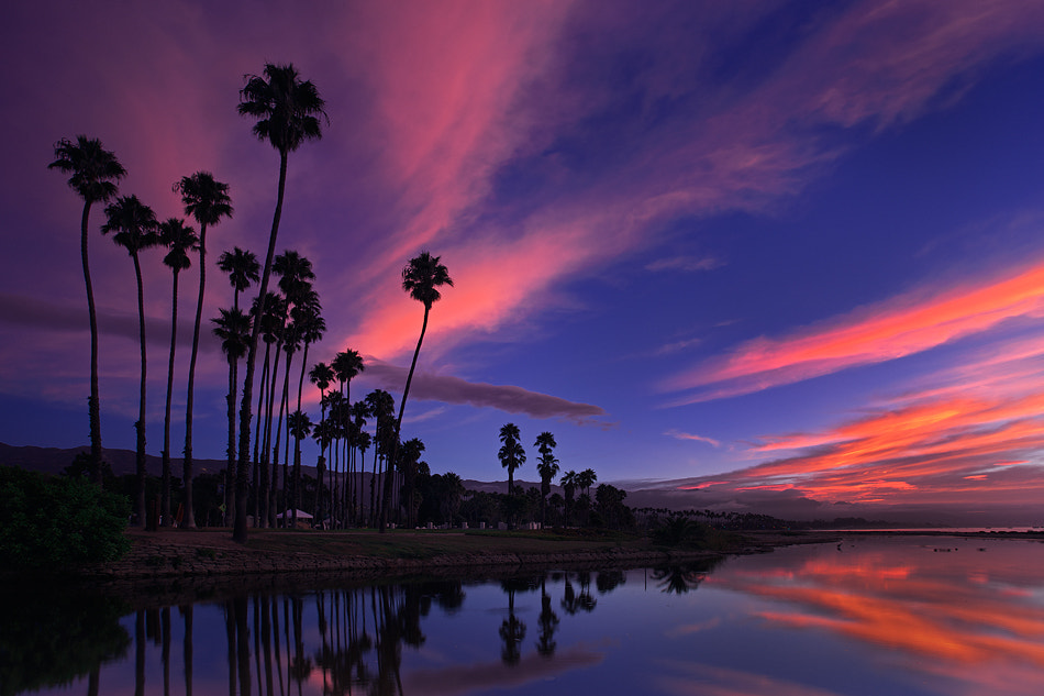 Photograph MG_6829  Palm Trees At Dawn by David Orias on 500px