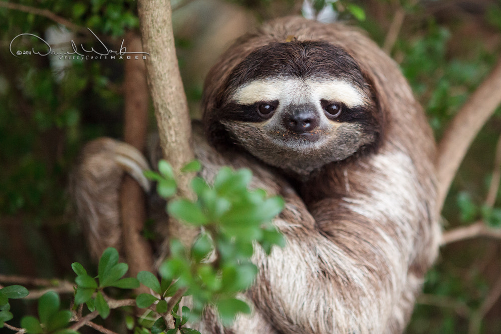 Photograph Leno the Sloth by Daniel Work on 500px