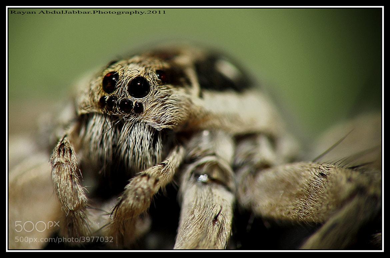 Photograph Spider by Rayan  Al-AbdulJabbar on 500px
