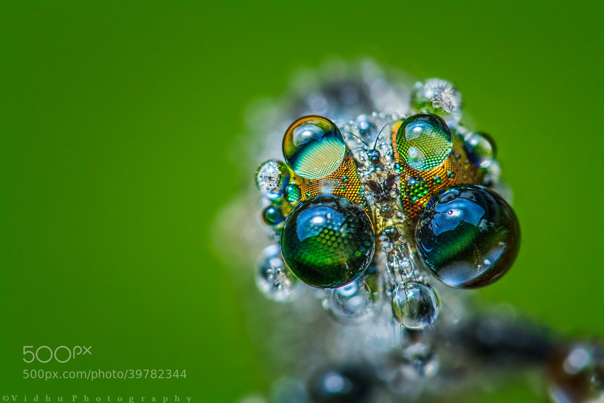 Photograph Do the dew by Vidhu S on 500px