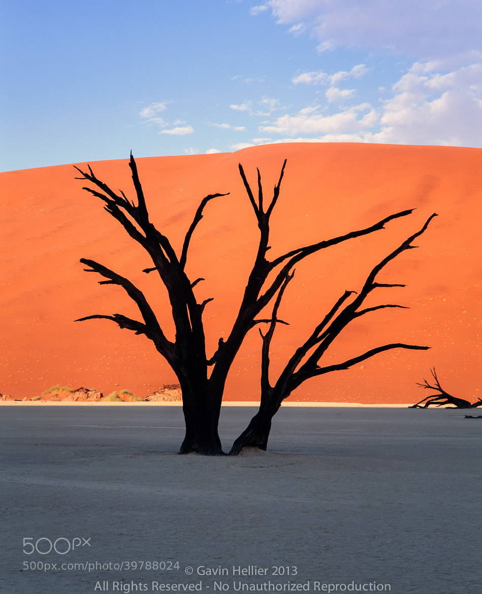 Photograph Dead trees and orange sand dunes, Dead Vlei,  Sossusvlei dune field, Namib-Naukluft Park, Namib Dese by Gavin Hellier on 500px