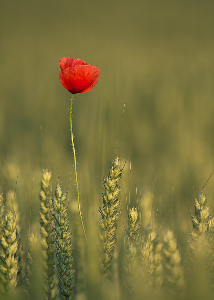 Photograph Red by Gusti Yogiswara on 500px