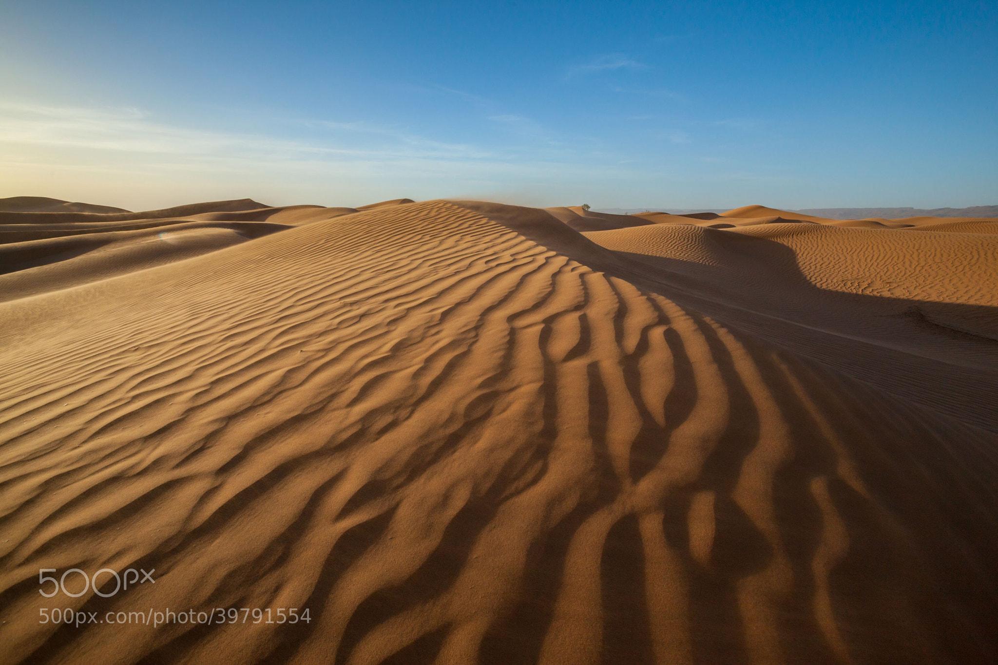 Photograph Desert by Emelianenko Dmitrii on 500px