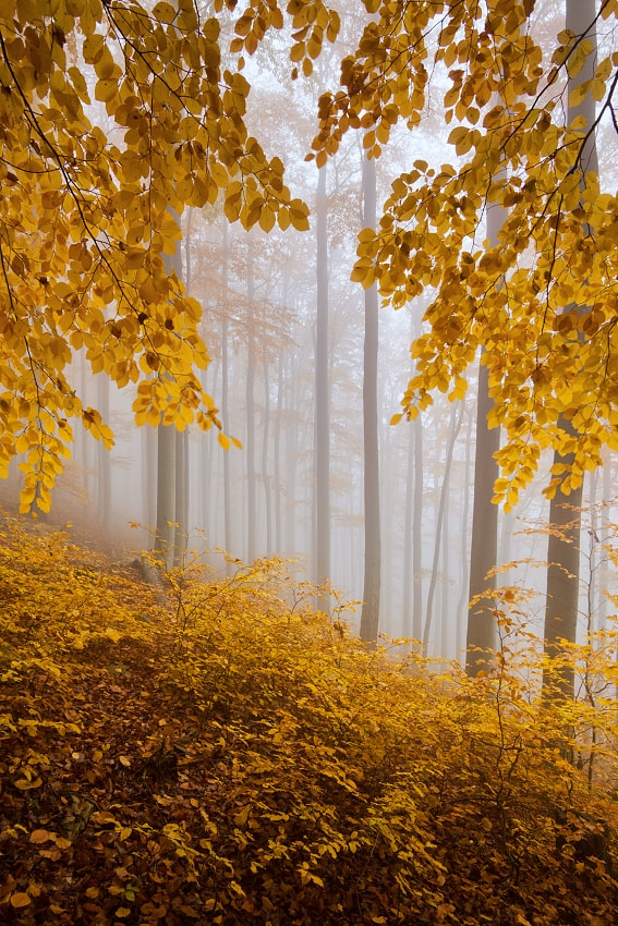 Photograph Autumn forest 1 by Daniel Řeřicha on 500px