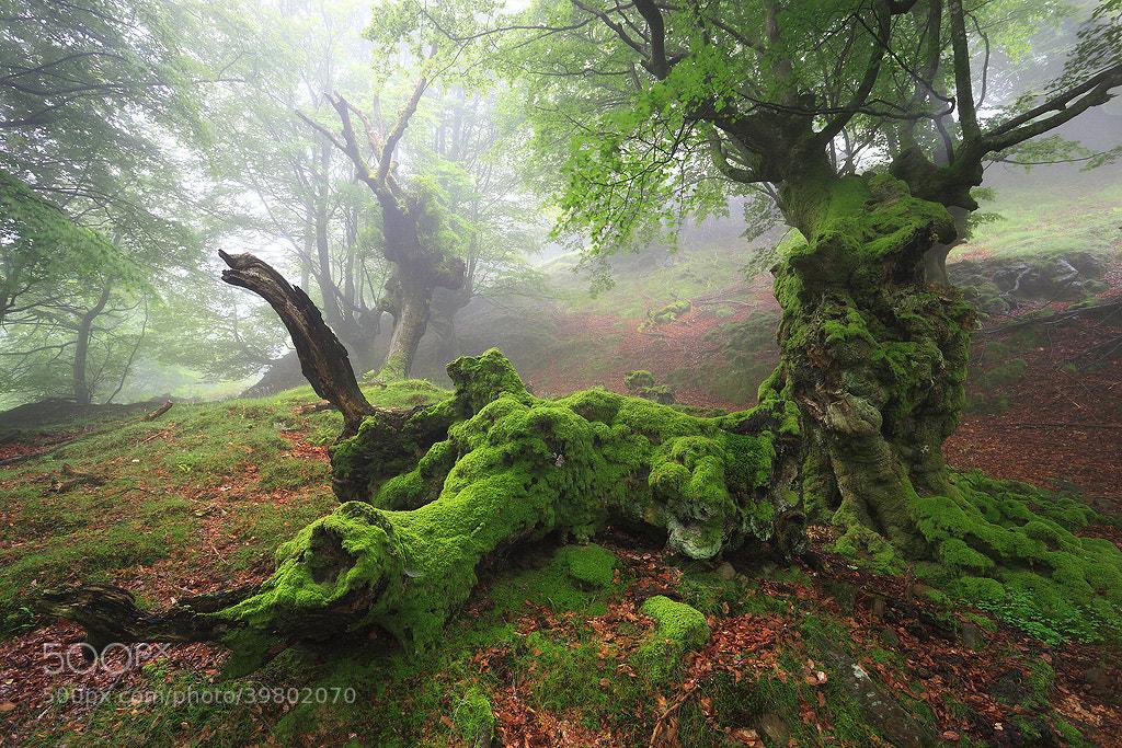 Photograph Urtzi Vera, Chinese Dragon by Portfolio Natural  on 500px