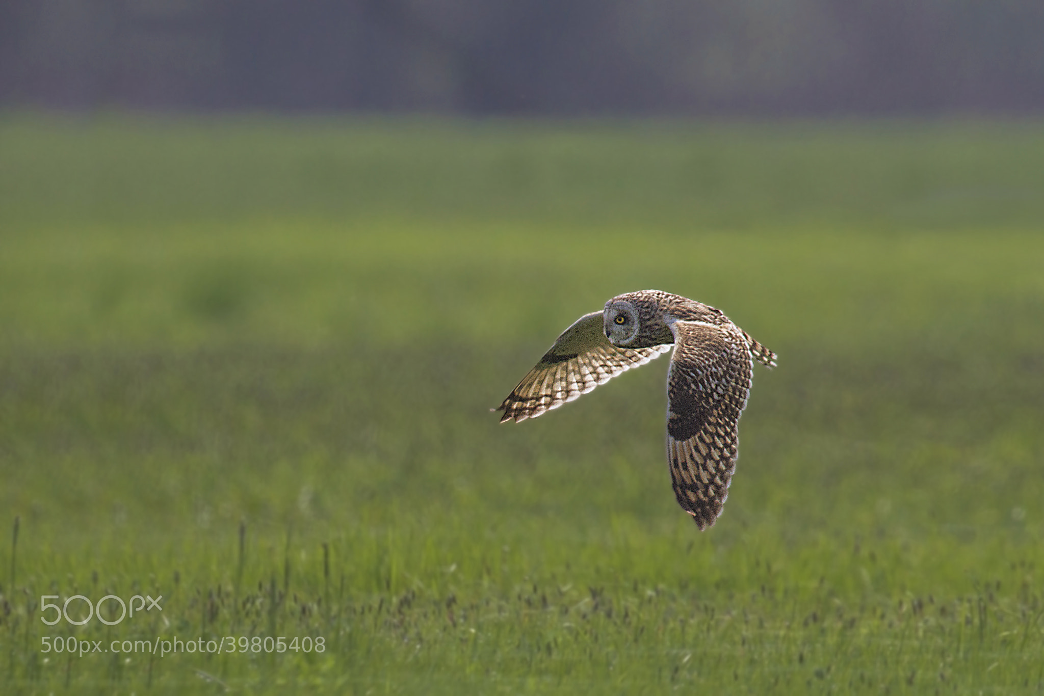 Photograph Flying on the grass by Marco Redaelli on 500px
