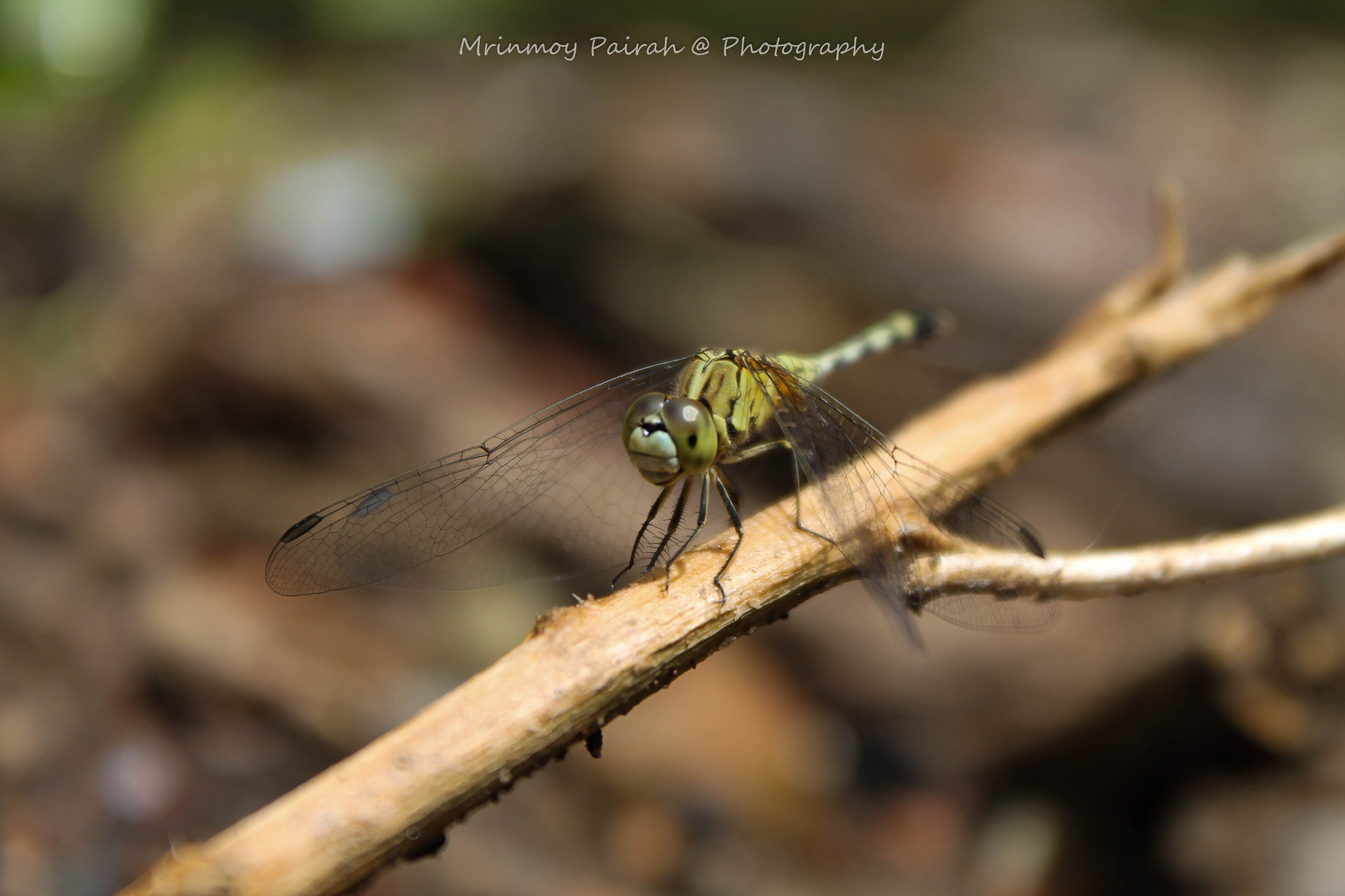 Photograph Dragon fly by Mrinmoy Pairah on 500px