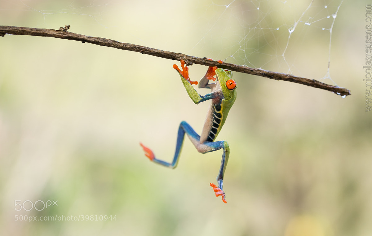 """Photograph """"Mission: Impossible"""" by Nicolas Reusens on 500px"""