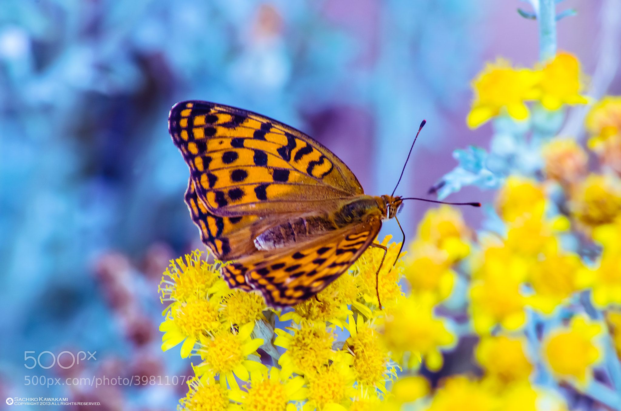 Photograph The weak insects by Sachiko Kawakami on 500px