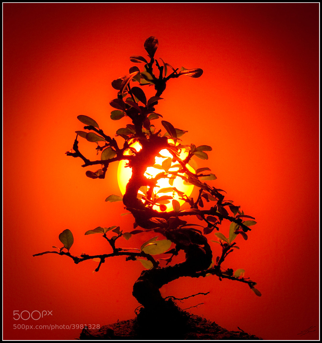 Photograph Bonsai by Pablo Tovar on 500px