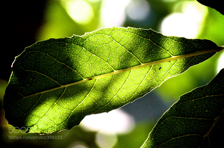 Photograph light green by Armando Mejía on 500px