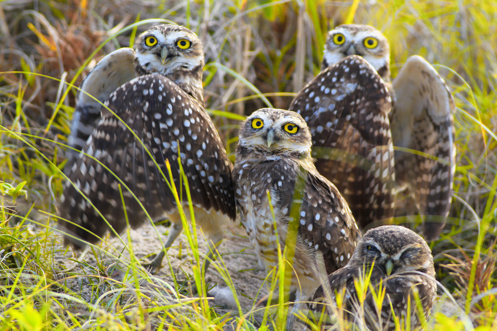 Photograph Brothers IV  by Itamar Campos on 500px