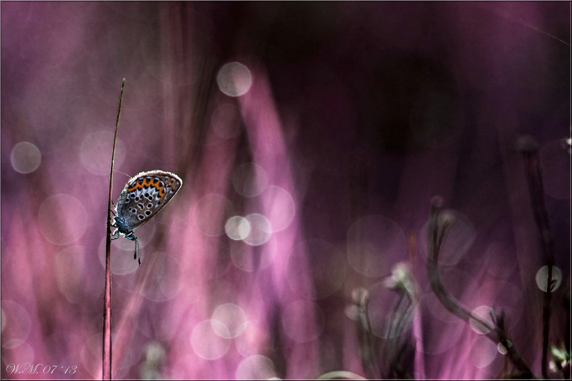 Photograph Purple dream... by Wil Mijer on 500px