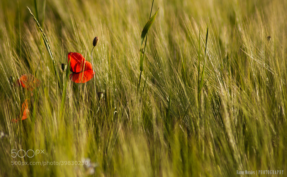 Photograph Hiding by Hannelore  on 500px