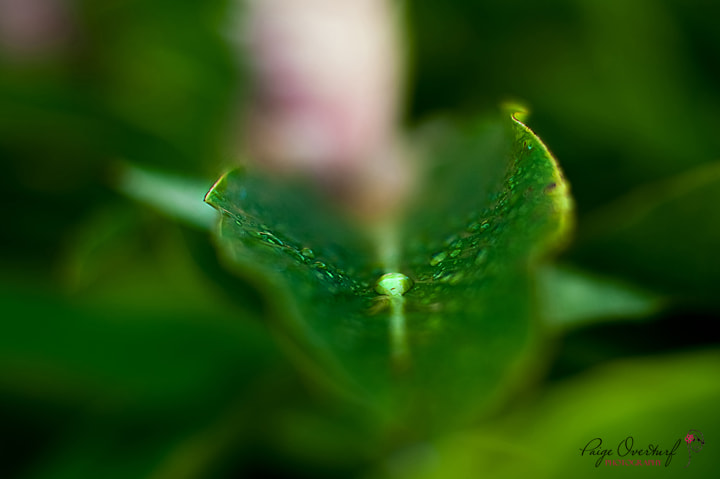 Photograph a drop of rain by Paige Overturf on 500px