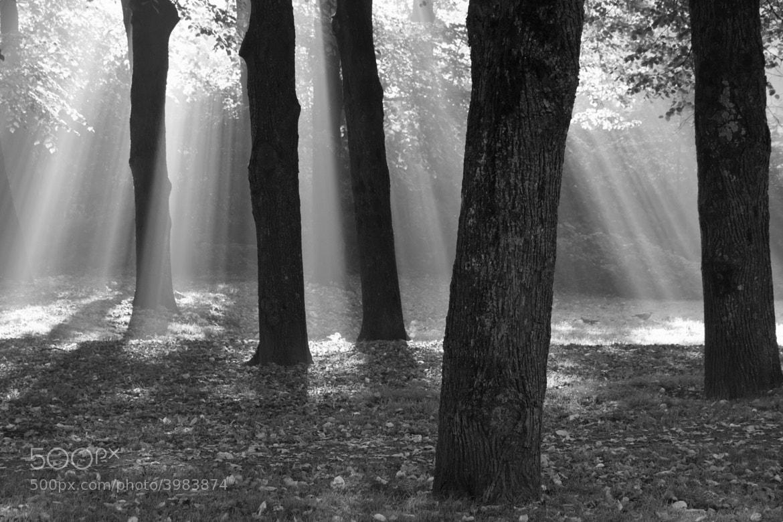 Photograph Light by Gijs de Kruijf on 500px