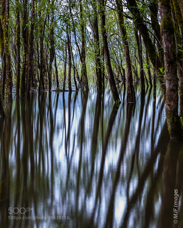 Photograph Flooded by Michael Flaherty on 500px
