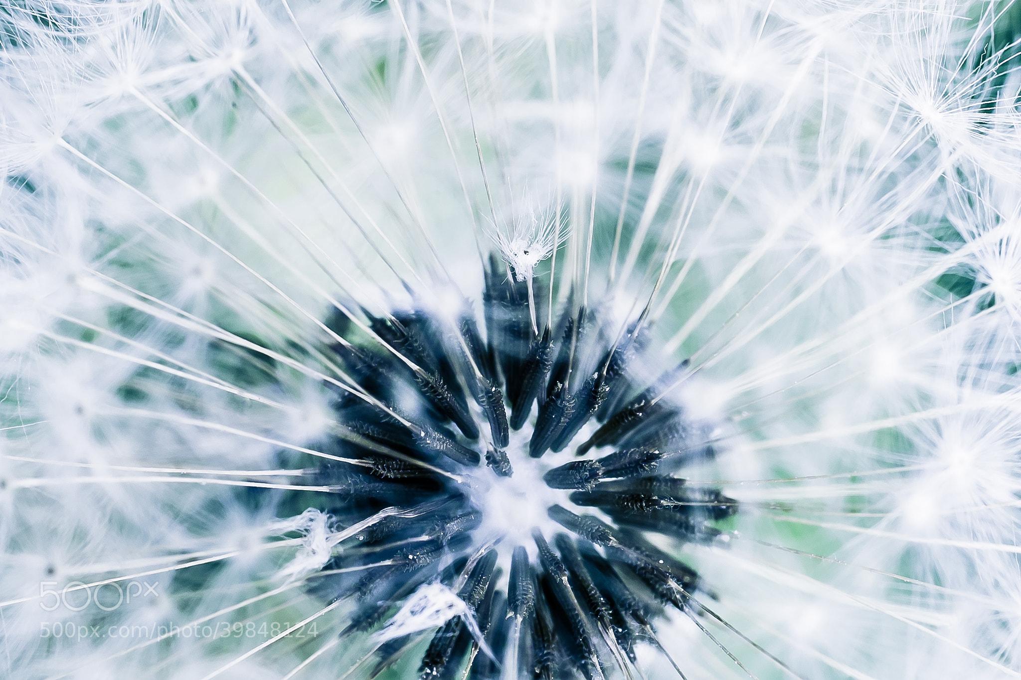 Photograph Untitled by Damjan Ðuranović on 500px