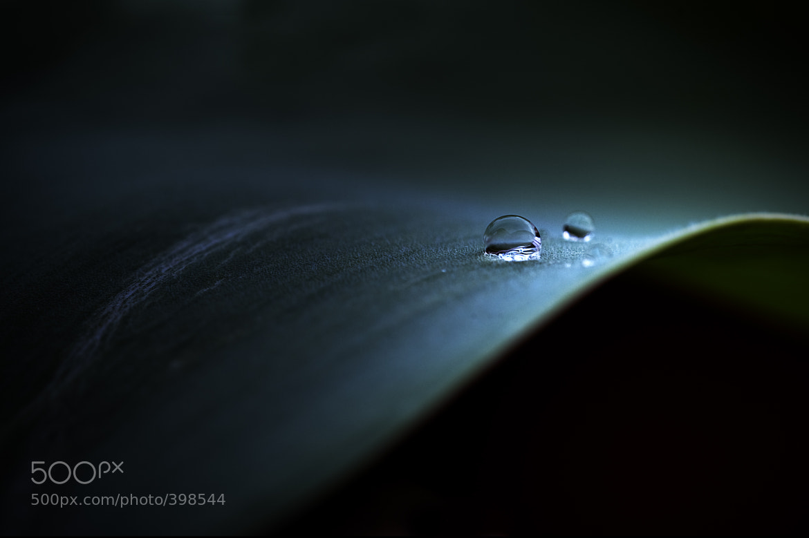 Photograph Rain Drop by Oliver Wagner on 500px