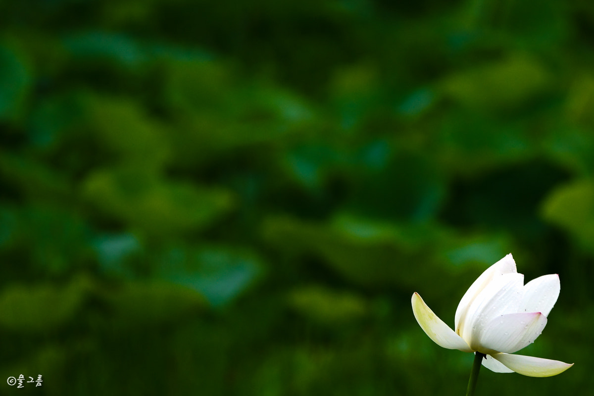 Photograph Lotus by DONGWOOK KIM on 500px