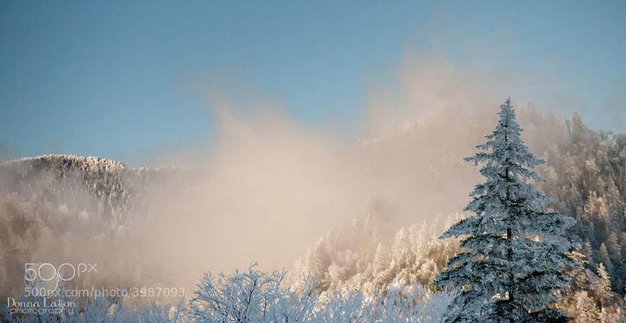 Winter scene on Newfound Gap in the GSMNP