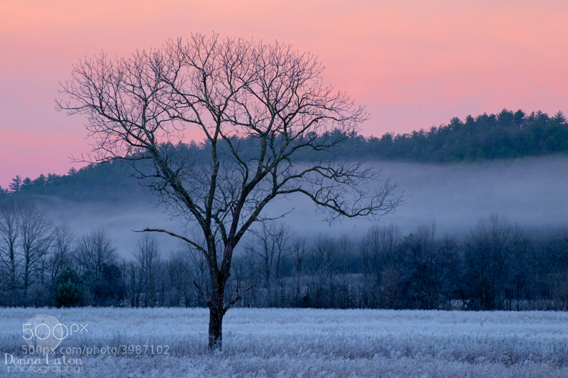 Pink sunrise in the GSMNP.