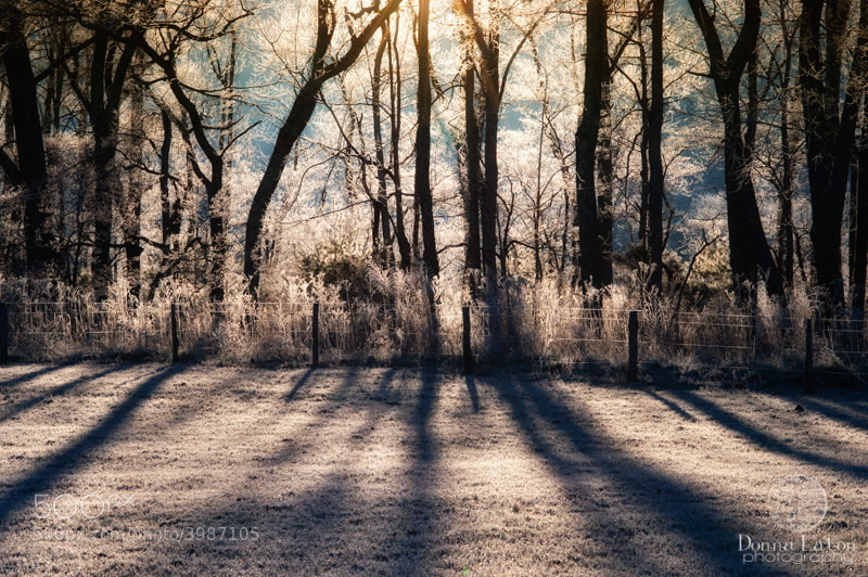 Sun coming through trees covered in frost in the GSMNP.