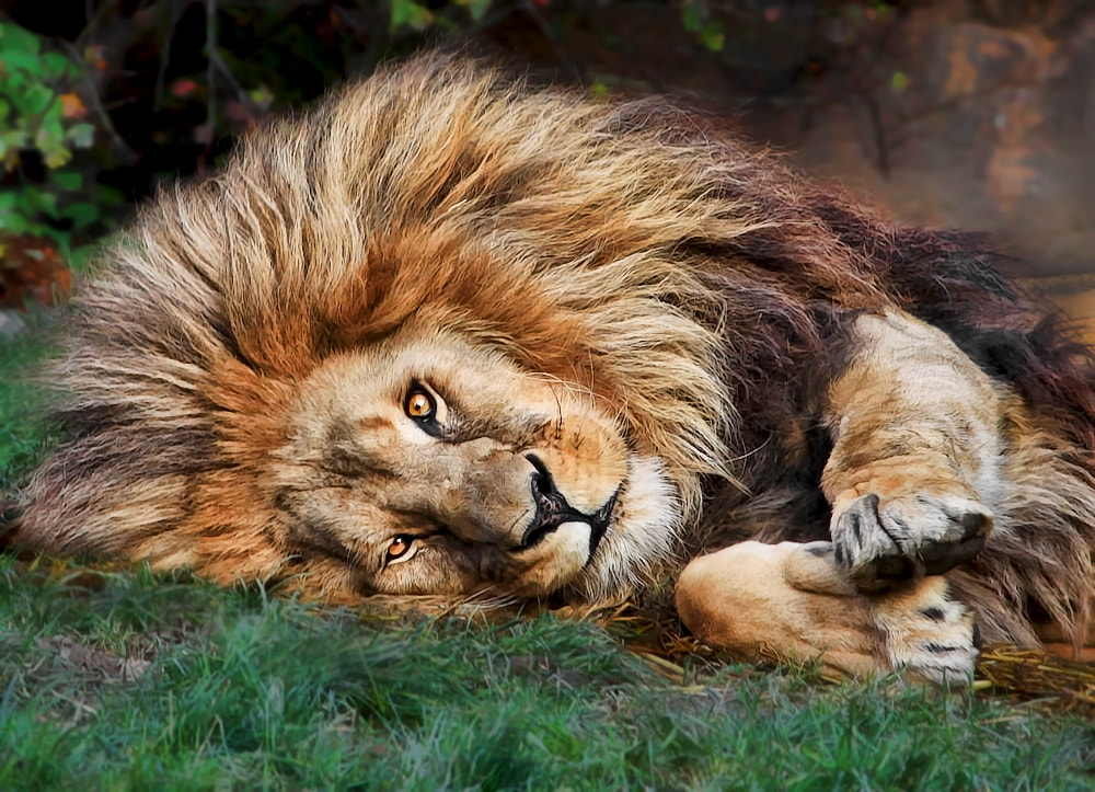 Photograph Let's cuddle! by Klaus Wiese on 500px