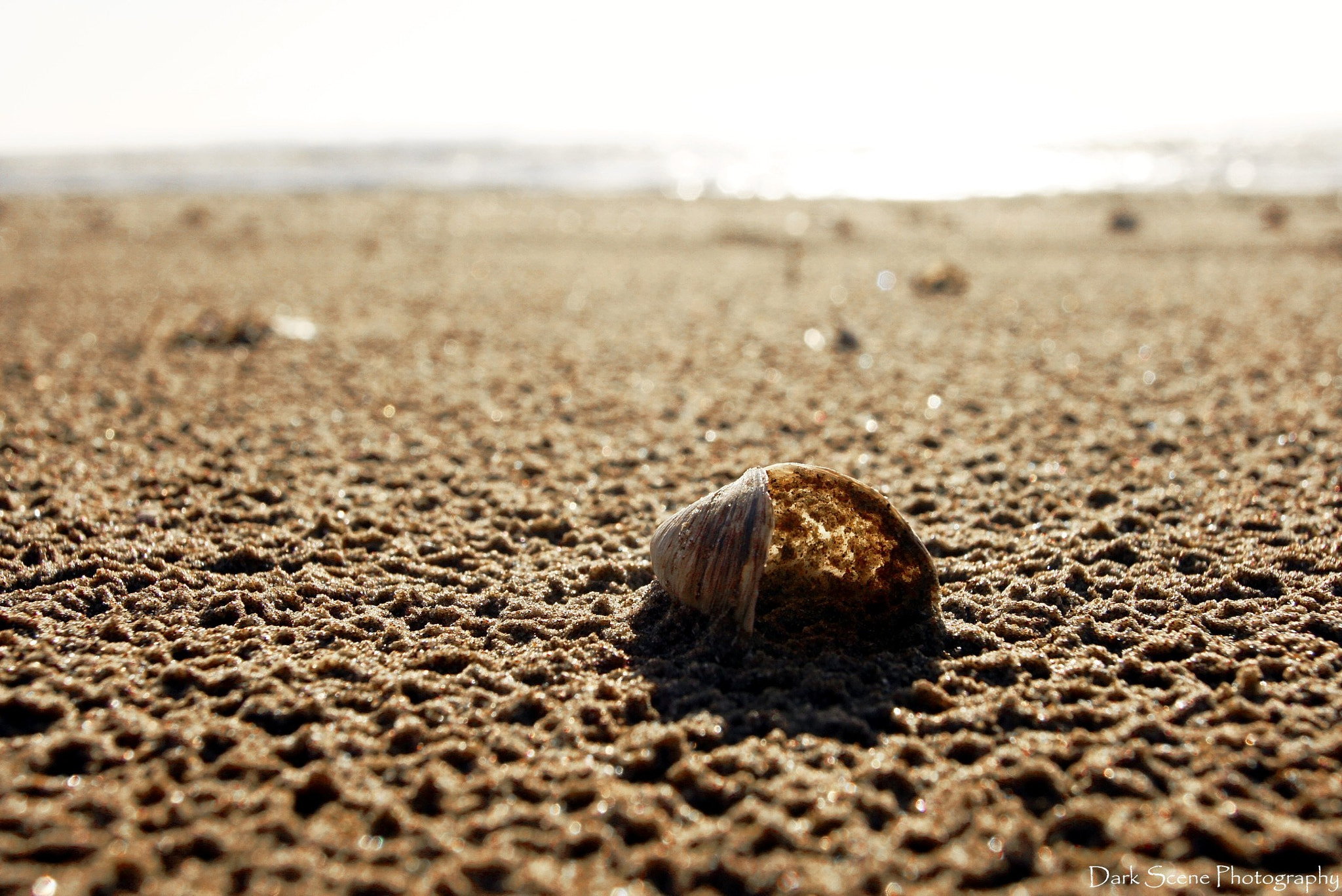 Photograph Shell-ter by Melanie Levesque on 500px