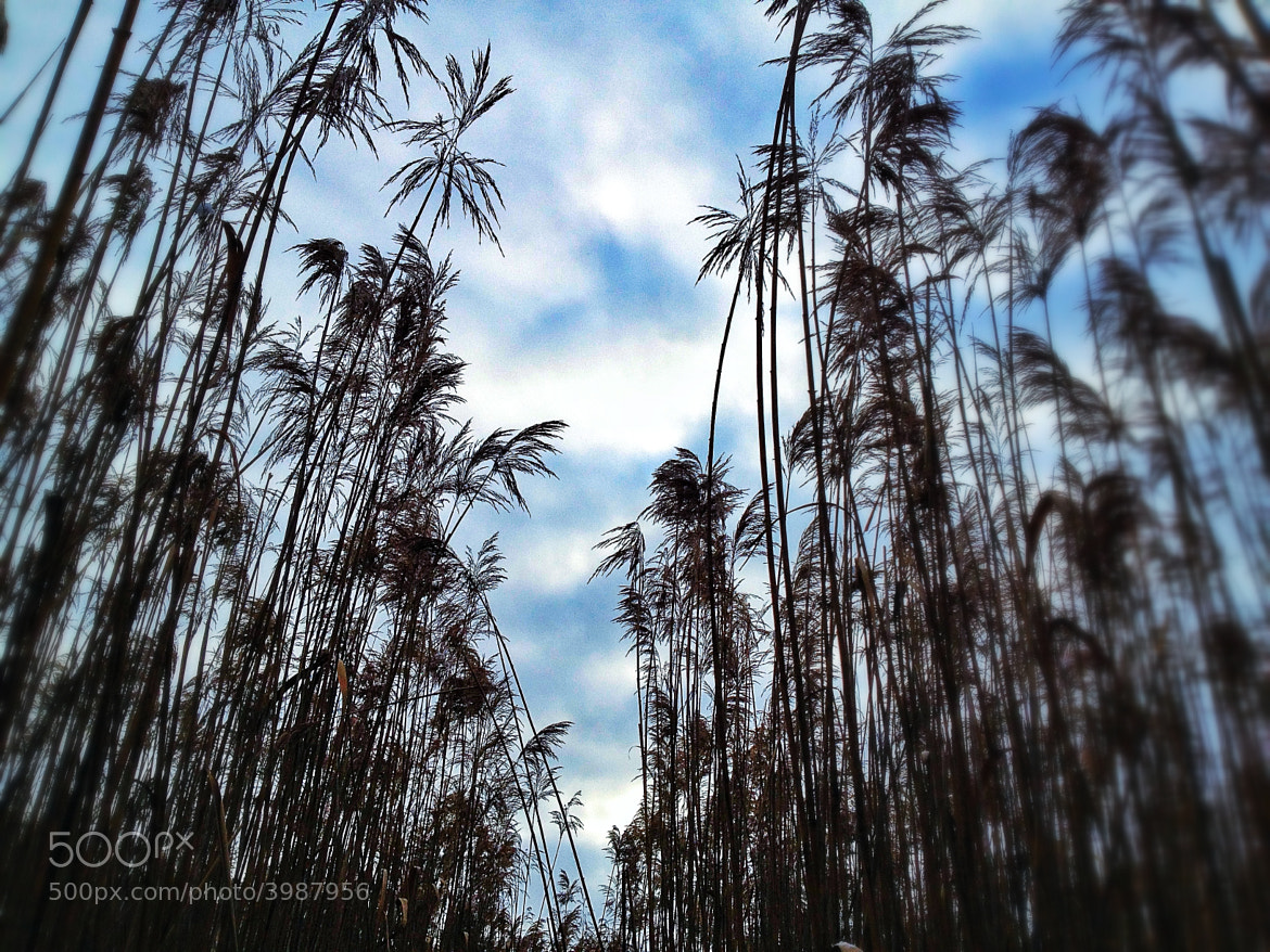 Photograph Winter Stalks by Robert Michael Walker on 500px