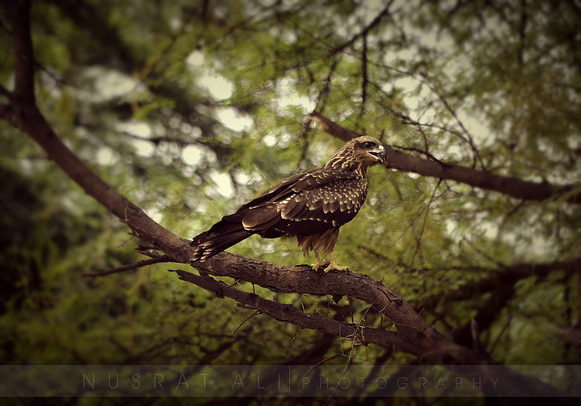 Photograph Eagle by Nusrat Ali on 500px