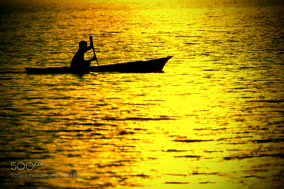 Photograph Rowing in the golden sea by darmin ladiro on 500px