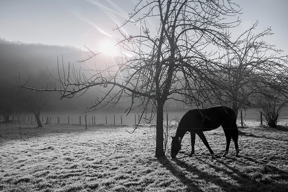 Photograph Lonely Horse by Jose Hamra on 500px