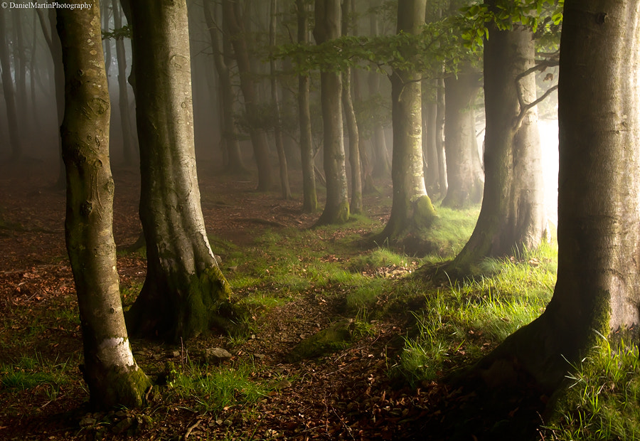 Photograph in the limits of the forest by Daniel Martin. on 500px